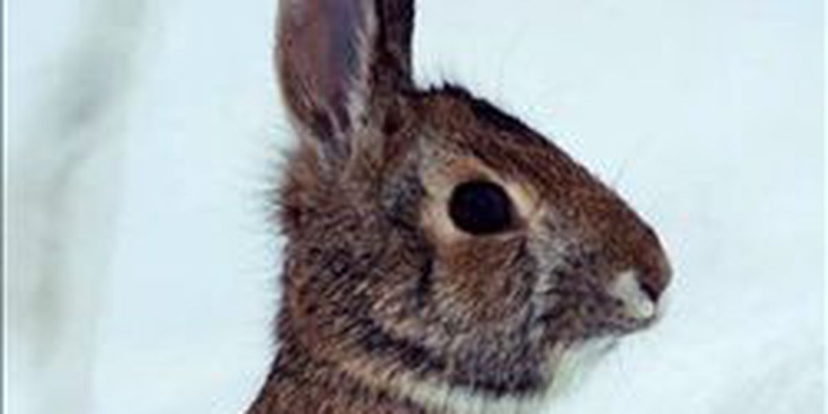 Rabbits Rescued: Nearly 100 rabbits seized from deplorable conditions