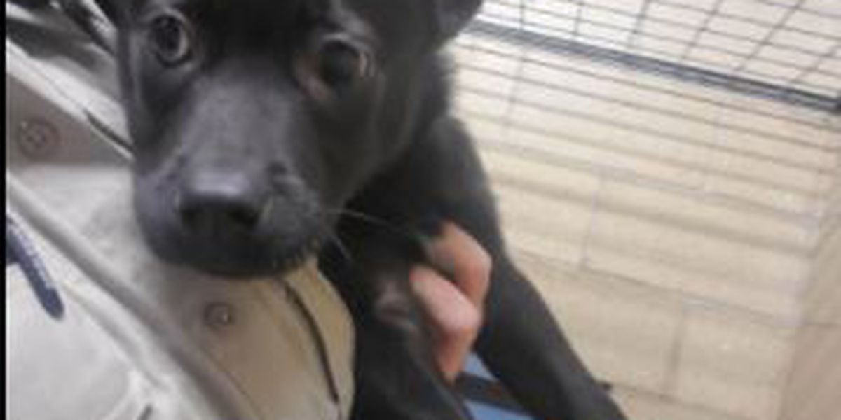 Puppy spends night outside after being left at the Richland County kennels