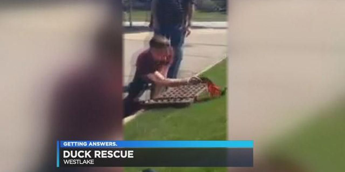 Army vet saves 7 ducklings from storm drain