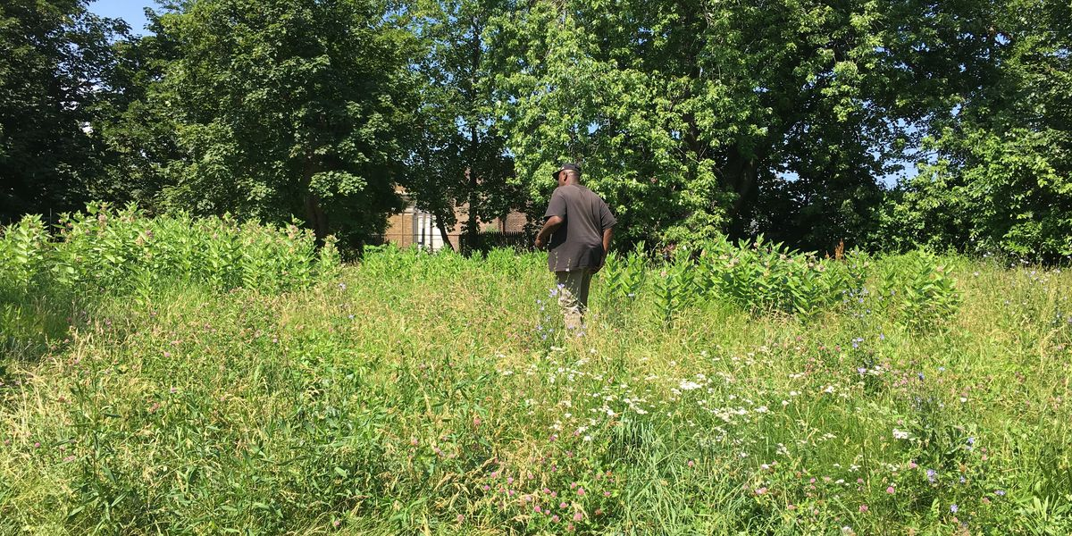 Cut it! Residents in East Side neighborhood want Cleveland to mow grass that they say is way too high
