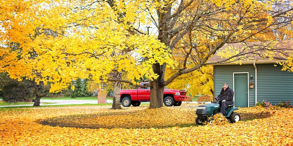 Hate raking leaves? We have a way you don't ever have to do it again!