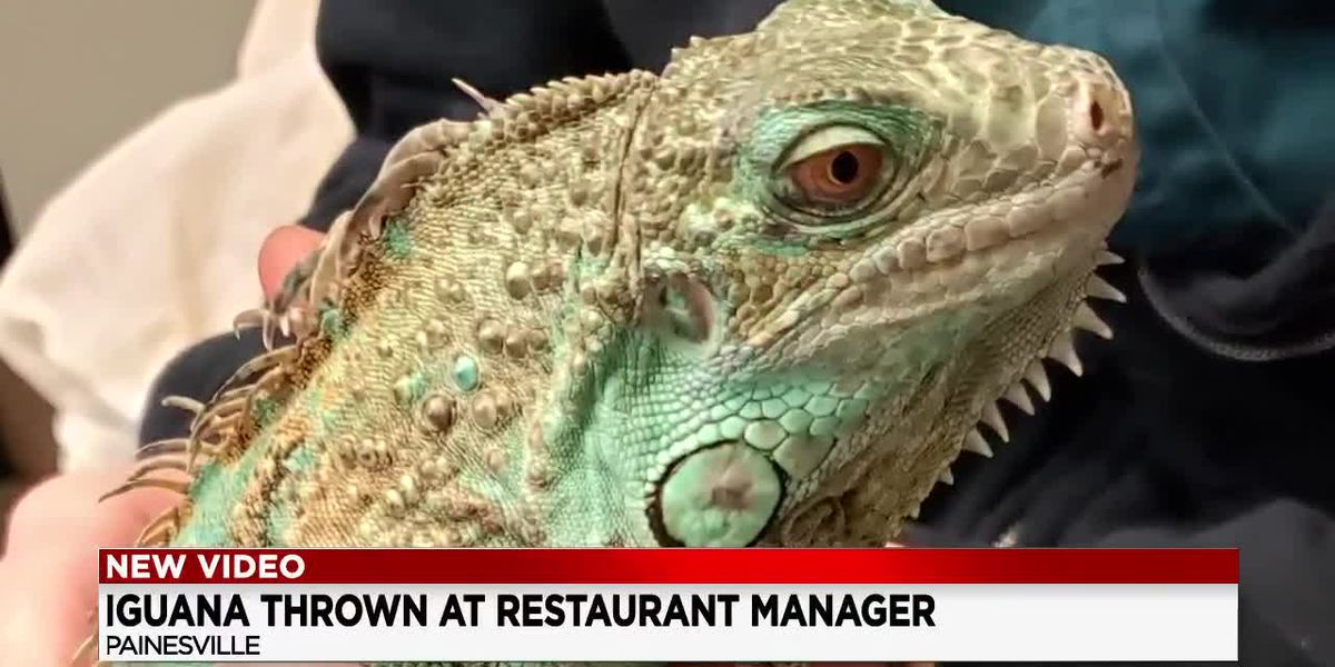 Bond set at $10,000 for Painesville man accused of flinging pet iguana at restaurant manager