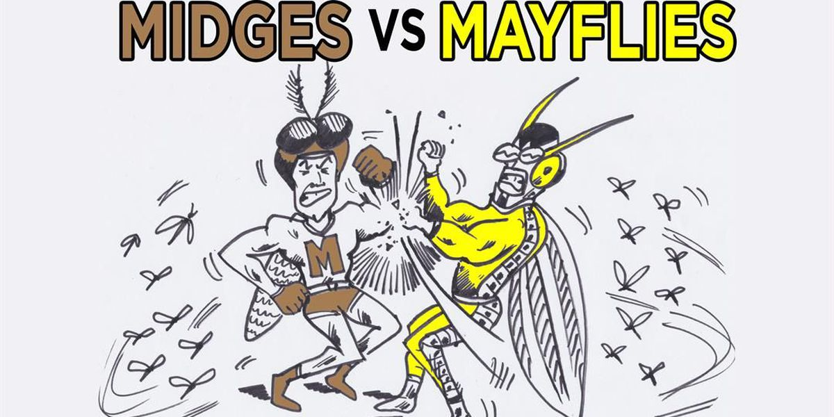 Mayflies and midges: What's the difference?