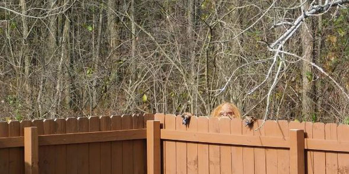 Bigfoot sighting in Ravenna, home listing includes cameos of the mythical missing link