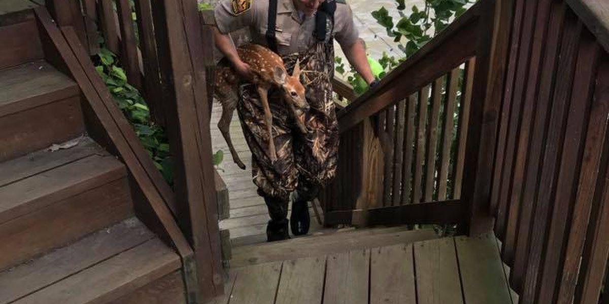 Baby deer rescued in Bay Village