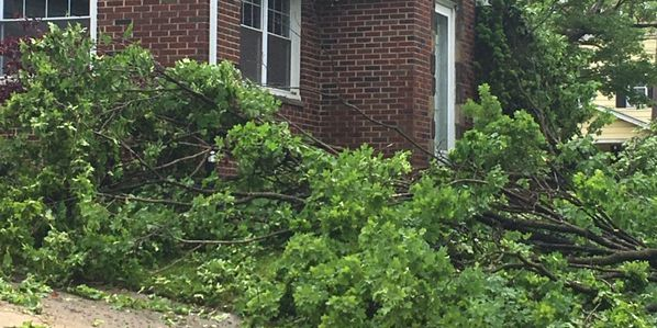 Vicious storm downs trees, limbs and wires in Akron