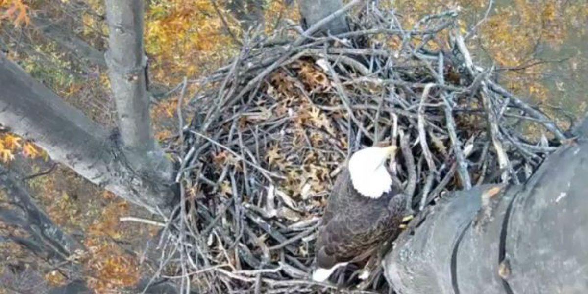 Avon Lake elementary school installs live bald eagle cam
