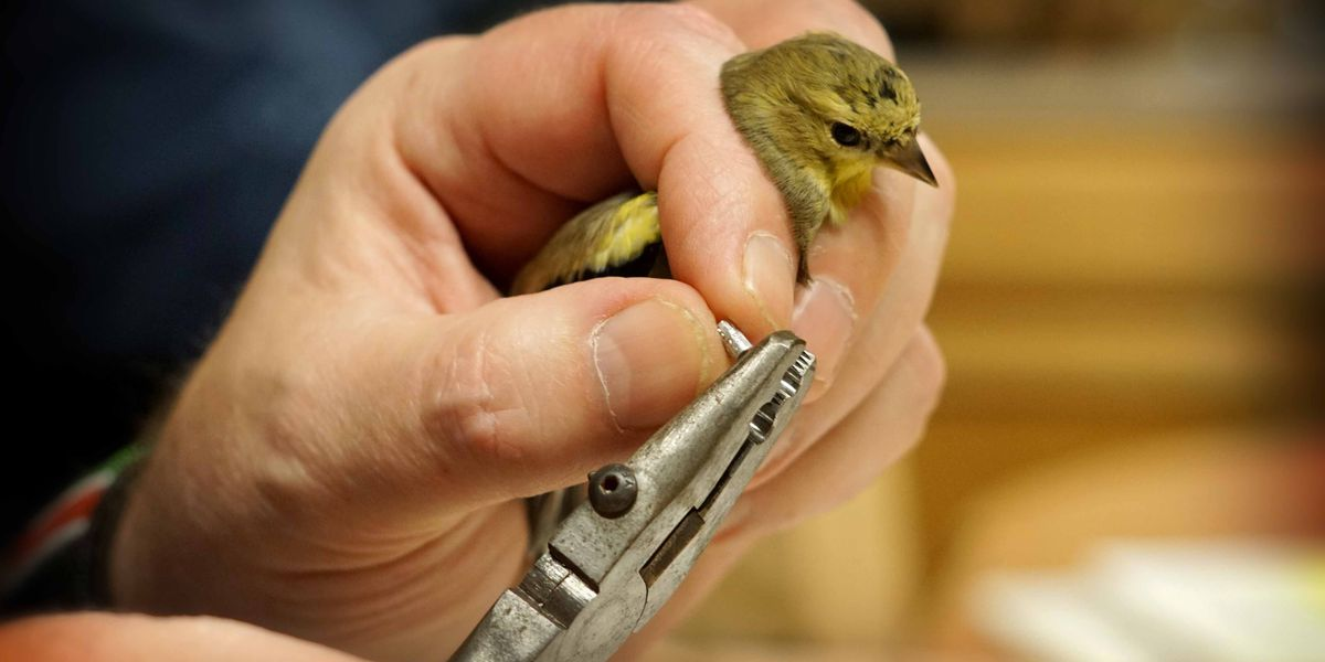 Cleveland Metroparks brings bird banding to Rocky River Sunday, snow is definitely a plus