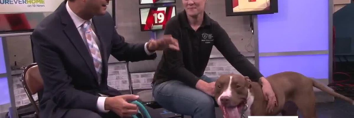 Cleveland APL Pet of the Week: Want to stay on the move this summer? March will lead the way