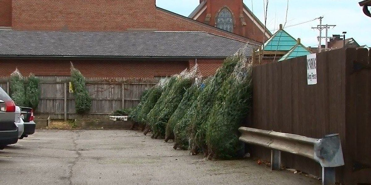 Your old Christmas tree gets you new mulch