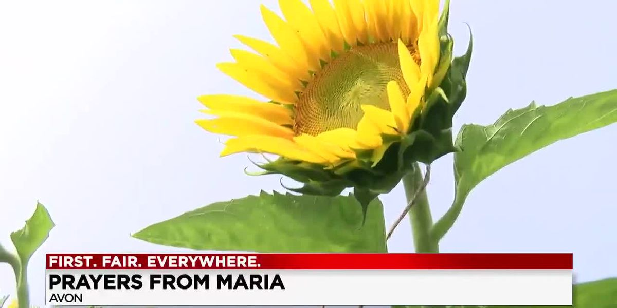 Prayers from Maria sunflower field planting ceremony commences new season in Avon