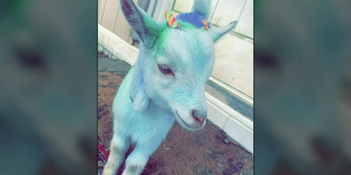 Alabama woman charged for stealing, painting goat