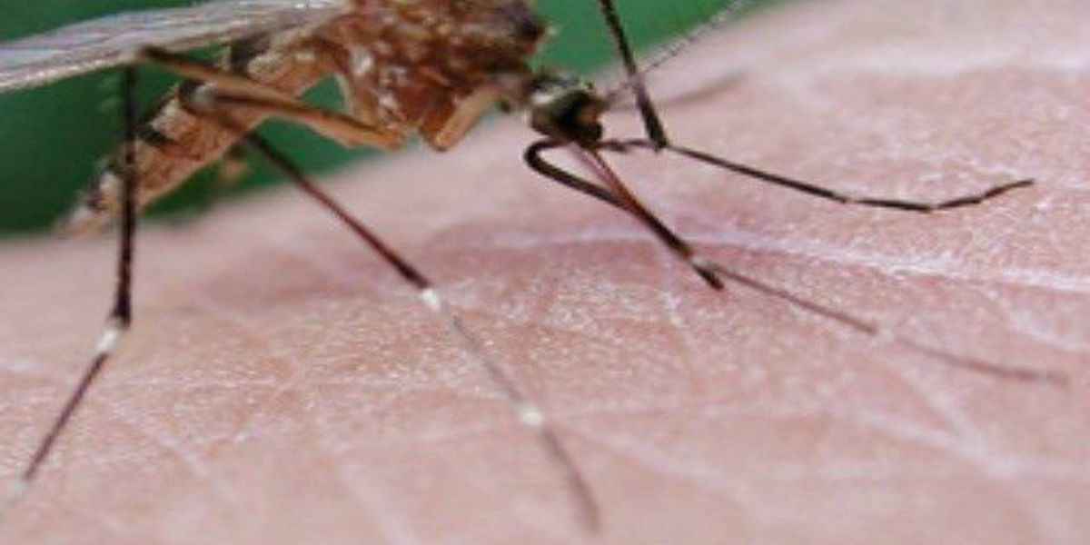 Medina County mosquito sample tests positive for West Nile virus