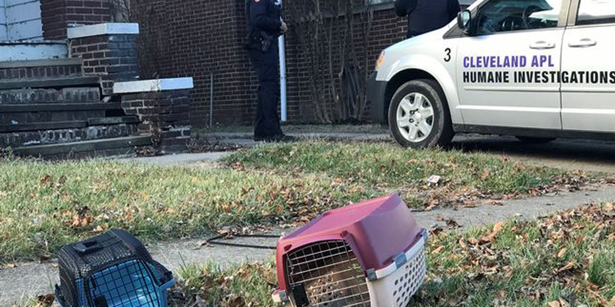 APL: 111 living cats and 3 dead cats found inside a home on Cleveland's East Side
