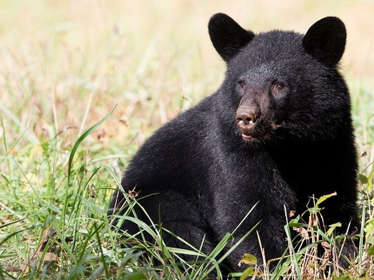 Police issue warning after a bear was spotted several times in Ashtabula County
