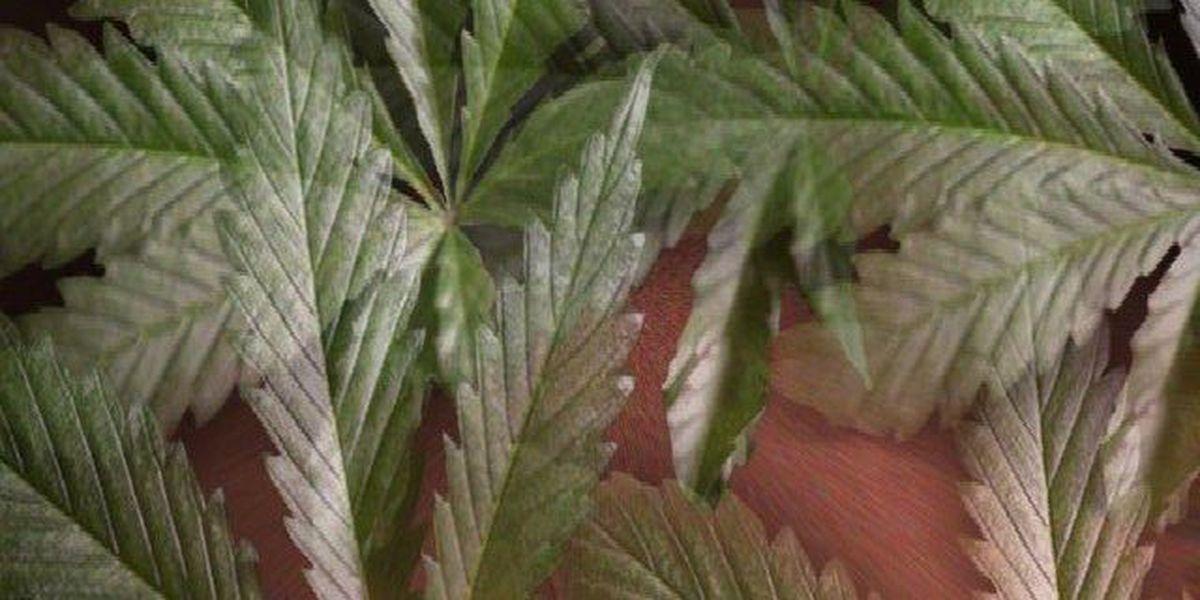 Ohio misses Sept. 8 deadline for medical marijuana program