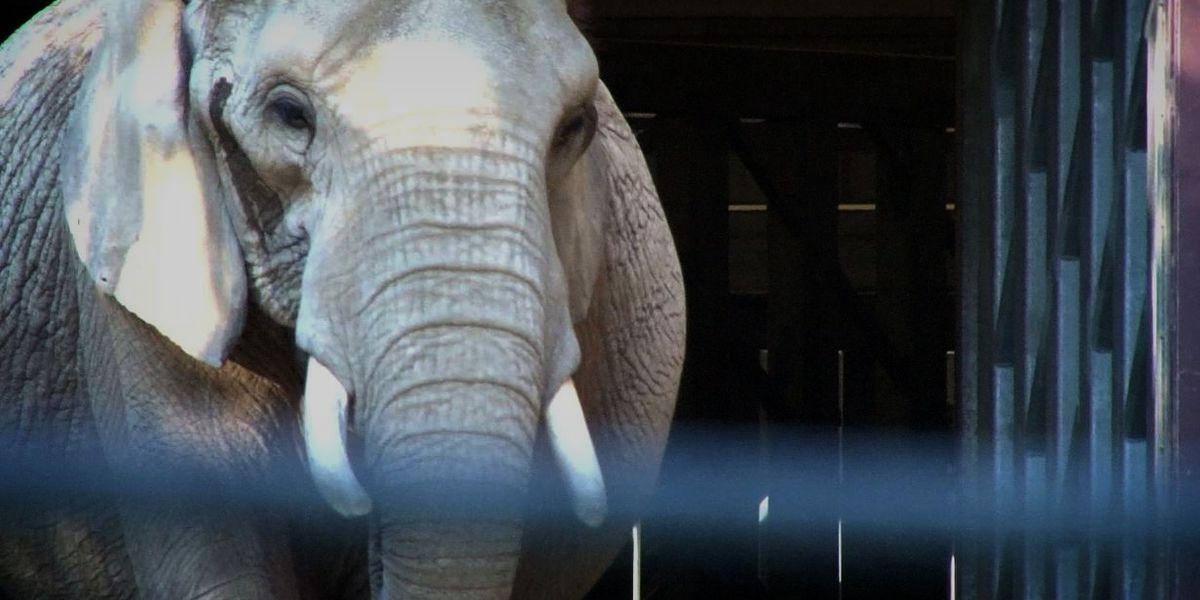 A peek inside Cleveland Metroparks Zoo elephant exhibit