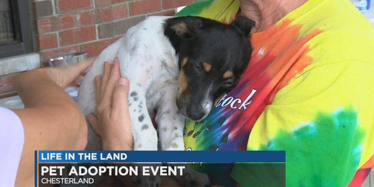 Geauga Humane Society celebrates 'dog-est' month with adoption event
