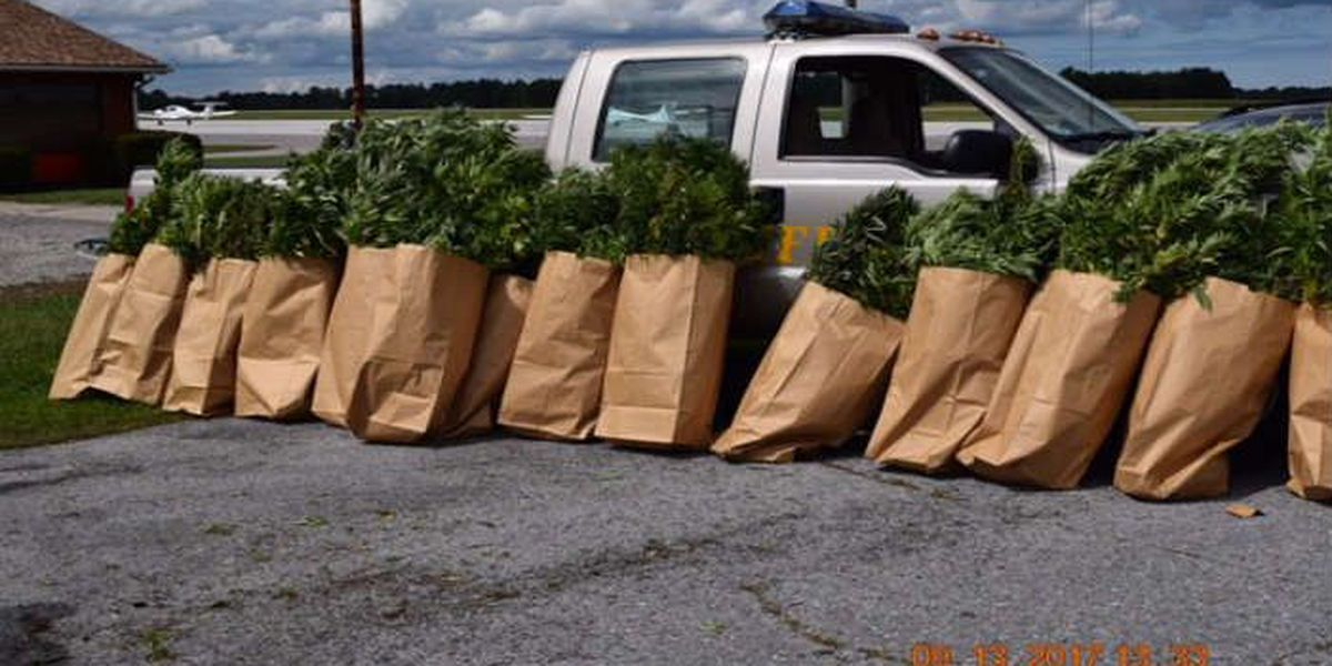 Task Force seize hundreds of 6-foot-tall marijuana plants from Lorain County