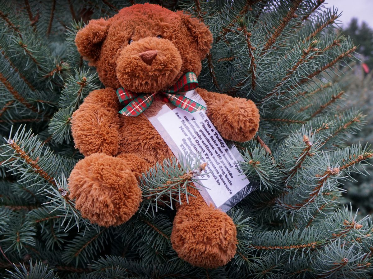 Why is a Peninsula farm putting bears in Christmas trees?