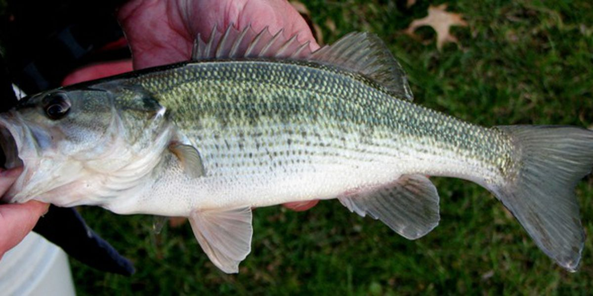 Ohio Wildlife Council makes changes to fishing size limits, seasons