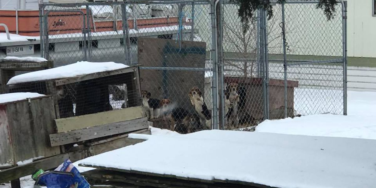 UPDATE: 23 dogs, 1 dead rescued from kennels at condemned home