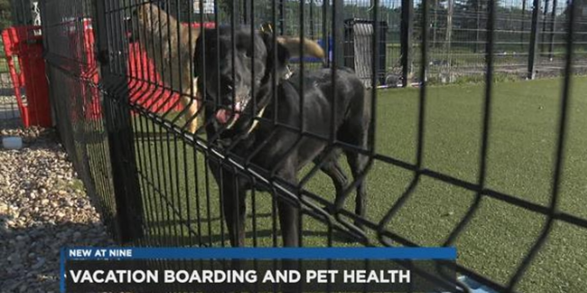 Keeping your dog safe and healthy when boarding them