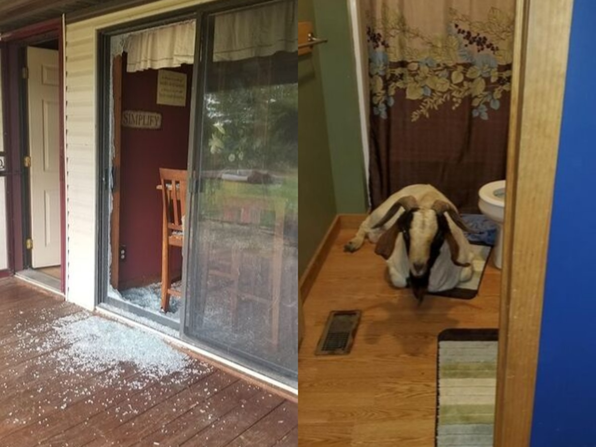 Homeowner thought home was broken into; Ohio deputies find goat in bathroom