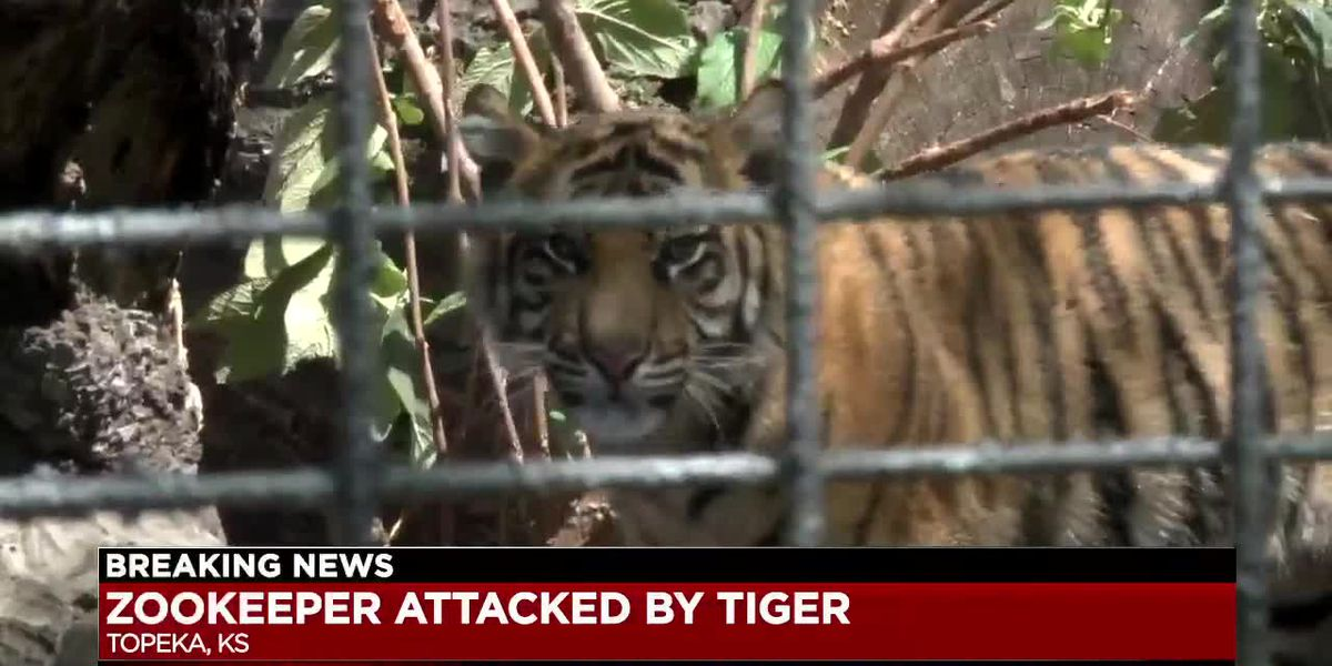 Akron Zoo defends tiger formerly kept their facility after he attacks zookeeper in Topeka, KS