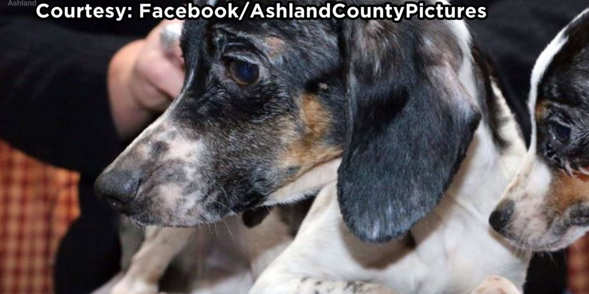 Humane Society rescues nearly 50 dogs from Ashland home