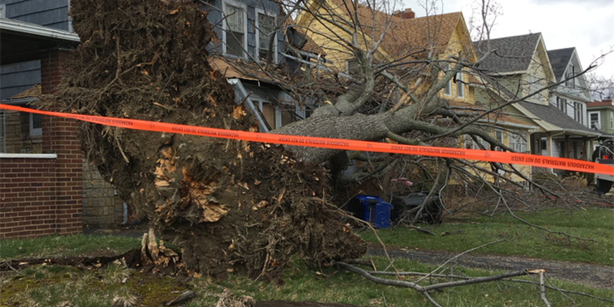 Photo of giant tree that fell onto house shows how lucky Cleveland family is after storm
