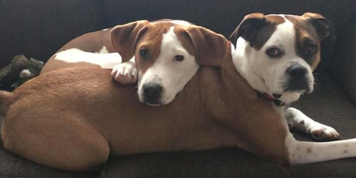 Cleveland APL urges residents to prepare for pets' needs as coronavirus spreads