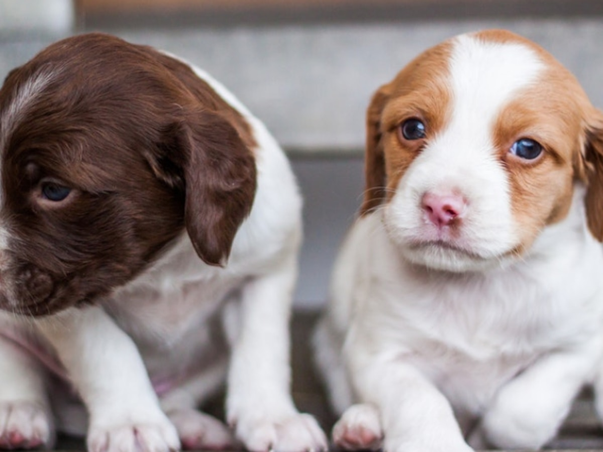 Geauga County non-profit in need following rescue of 40 puppies
