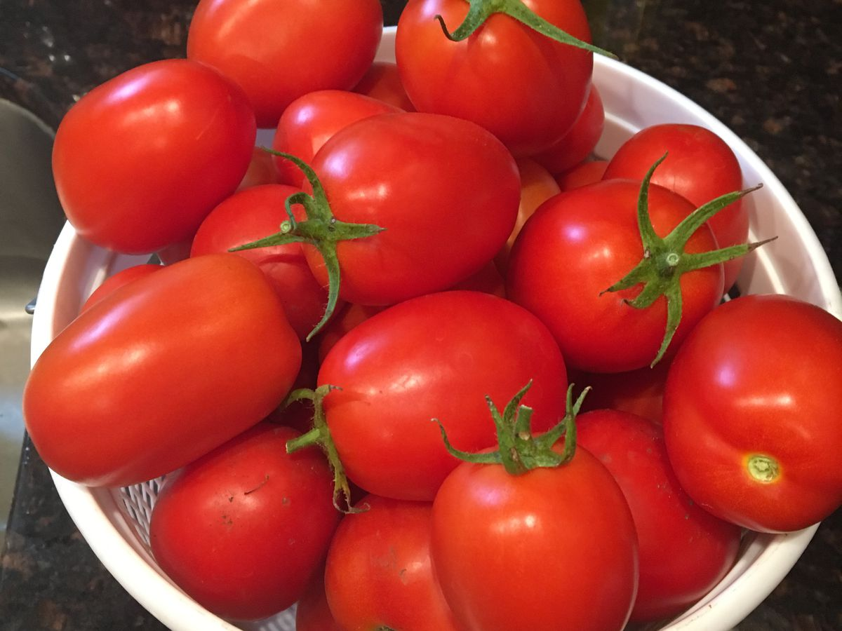 What do you do with your garden tomatoes? The Taste Buds are talking tomato recipes