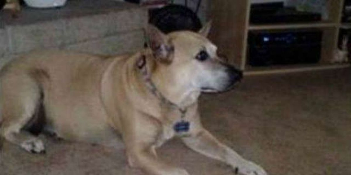Dog missing from accident scene