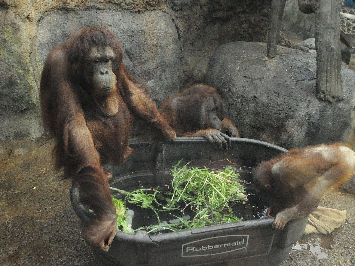 Cleveland Metroparks Zoo to reopen RainForest March 2