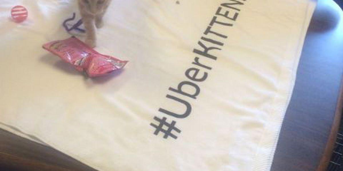 Uber delivers kittens all over Cleveland