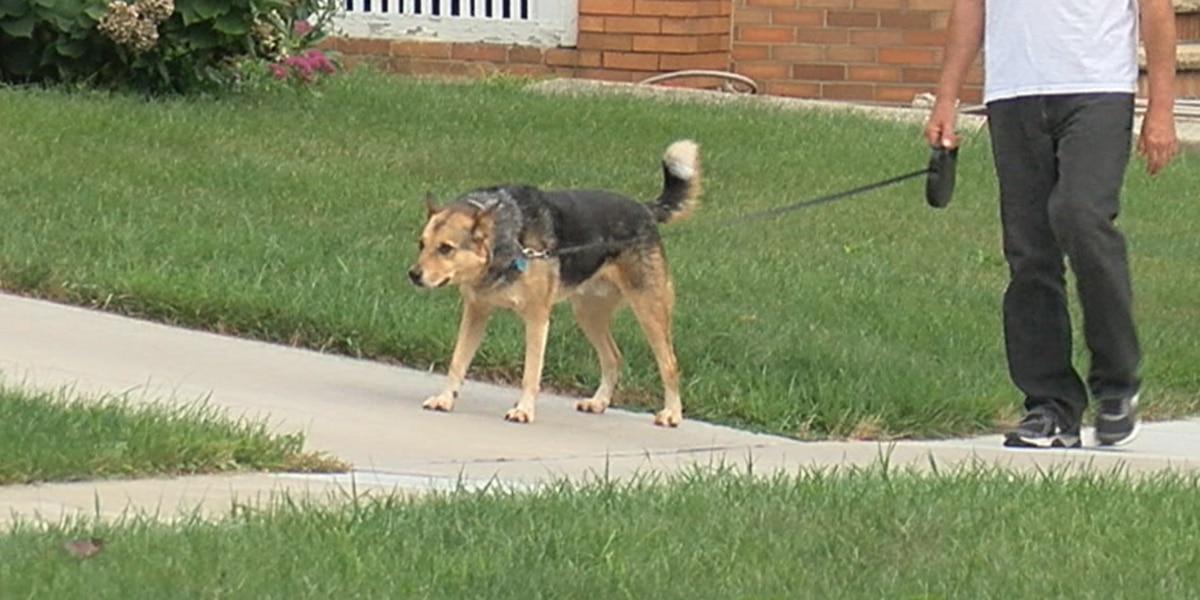 Lakewood's law banning retractable dog leashes could be 'tweaked' soon