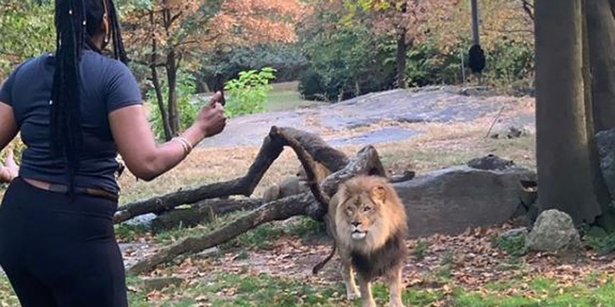 Police: Woman who taunted lion at Bronx Zoo turns herself in