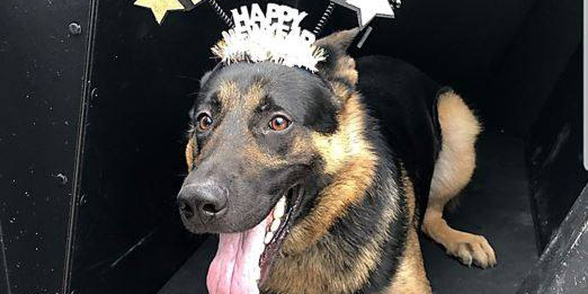 Dogs just want to have fun, Shaker Heights K9 shows softer side