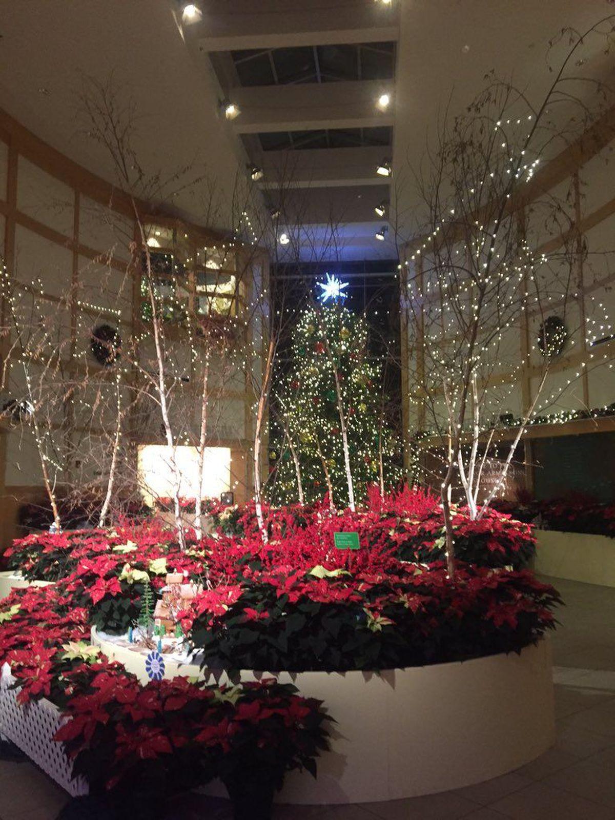 Cleveland Botanical Garden Glow Holiday Exhibit