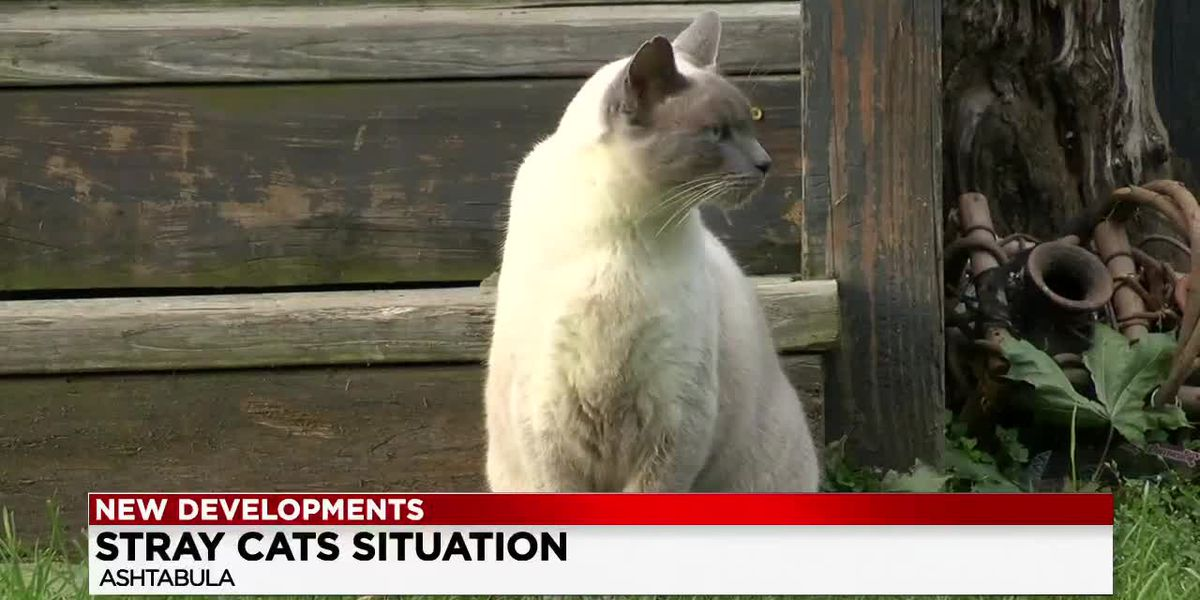 Ashtabula considers ban on feral cats after stray found hanging from tree