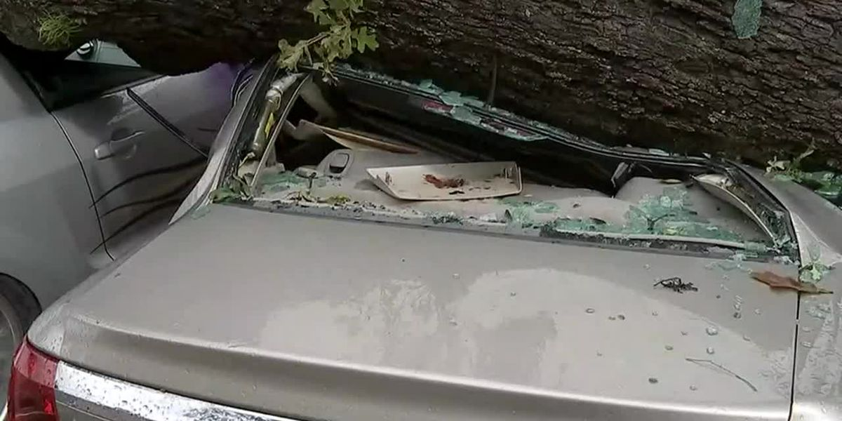 Fallen trees crushed cars in Houston amid Beta