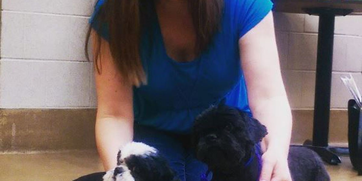Rescued Shih Tzus adopted