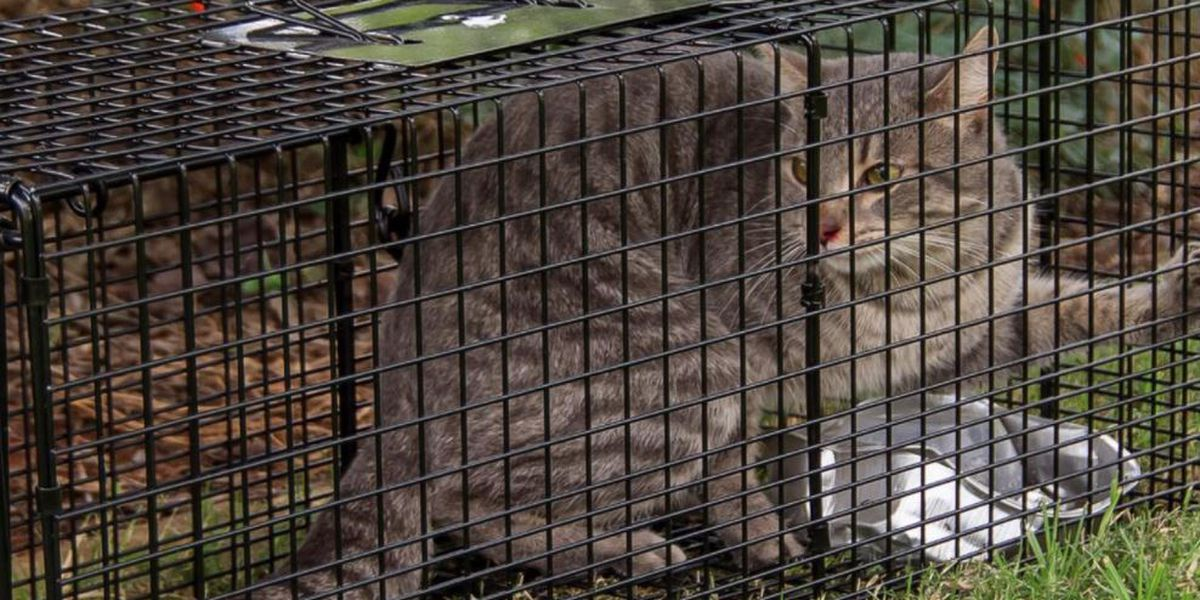 Brooklyn, Parma Heights stop trapping feral cats