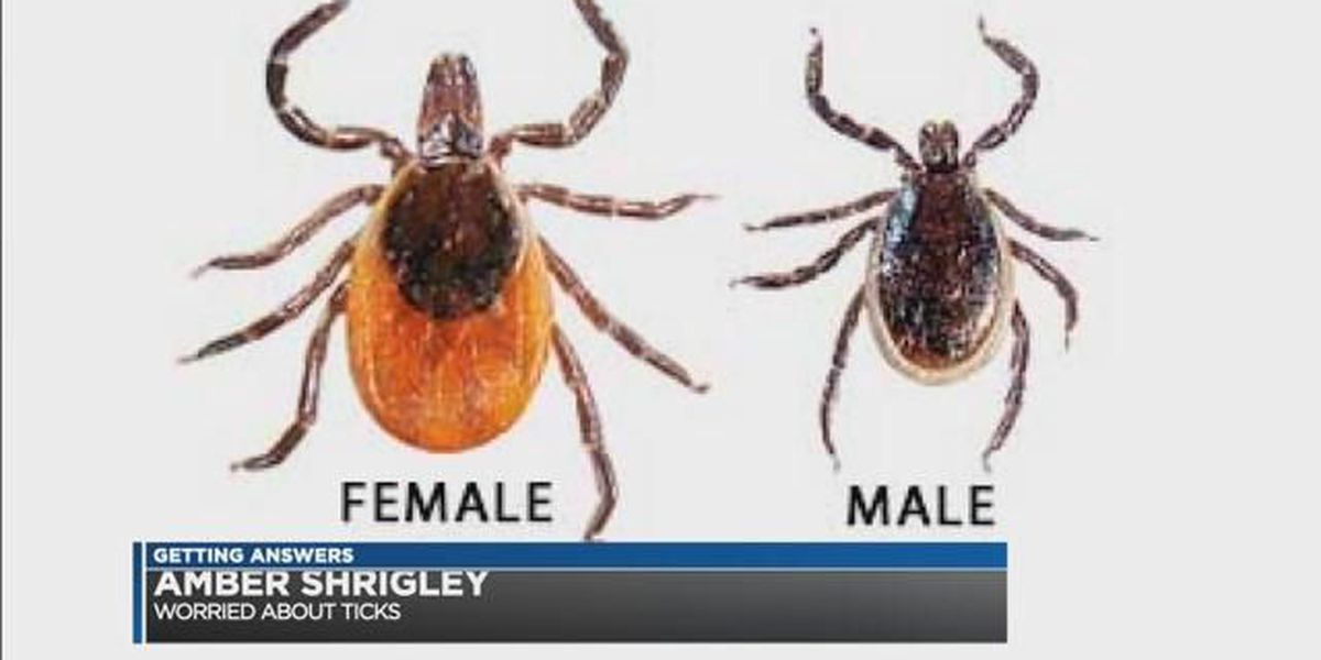 Expect to see a ton of ticks this year in Northeast Ohio