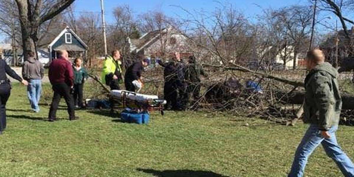 Child hit by falling tree near Elyria school, hospitalized
