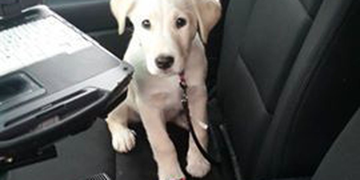 Shaker Heights police officer helps a family and a cute pup