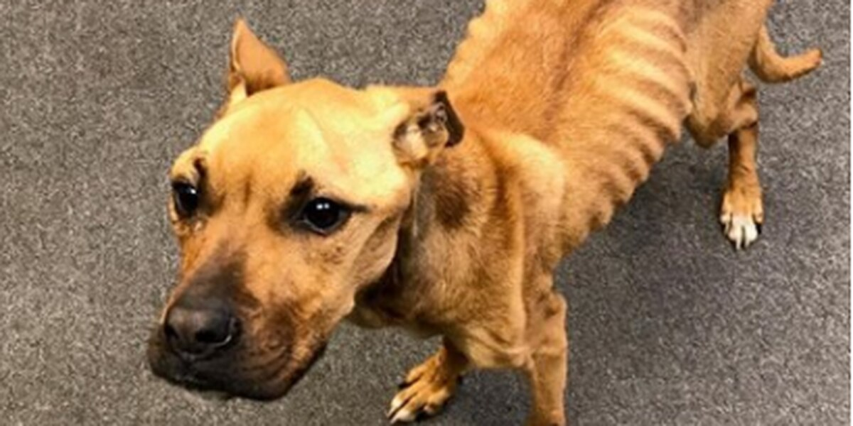 Dog rescued from starvation by animal control