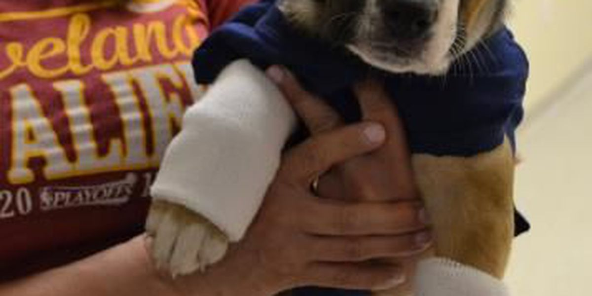Humane society recreates Cavs pregame with pups named after players (video)